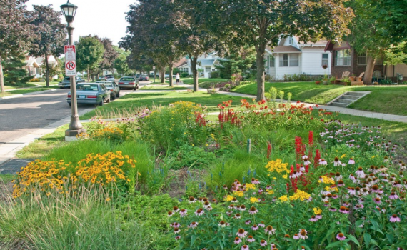 Photo of boulevard planted with native plants