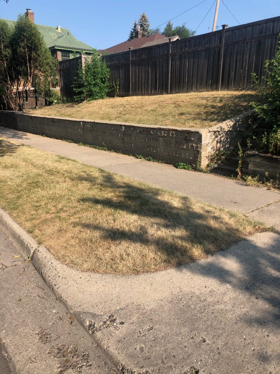 Dead Lawn, What to Do?